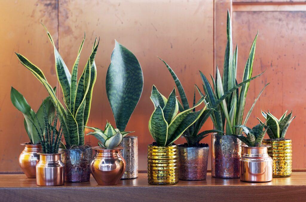 Cura delle piante da interno